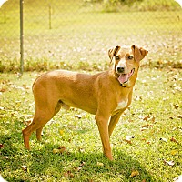 Adopt A Pet :: Red - Georgetown, KY