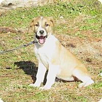 Adopt A Pet :: NINA - Hartford, CT
