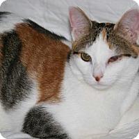 Adopt A Pet :: Patches *Pending Adoption* - Philadelphia, PA