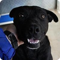 Adopt A Pet :: Miles - Dayton, OH