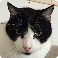 Adopt A Pet :: Trevor - New Windsor, NY