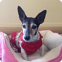 Adopt A Pet :: Paisley - New Port Richey, FL