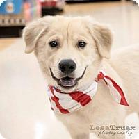 Adopt A Pet :: Uno - Frisco, TX