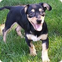 Adopt A Pet :: Spike - Willingboro, NJ