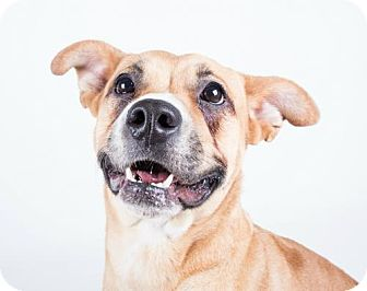 Shepherd (Unknown Type) Mix Dog for adoption in Decatur, Georgia - Kailey