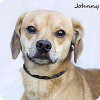 Adopt A Pet :: Johnny - Shamokin, PA