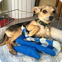 Adopt A Pet :: Brittney - Orange, CA