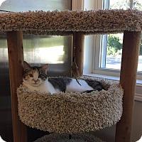 Adopt A Pet :: Daisy - Peace Dale, RI