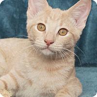Adopt A Pet :: Tasha - St Louis, MO