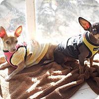 Adopt A Pet :: Frick - Van Nuys, CA