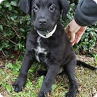 Adopt A Pet :: Boomer - Allentown, NJ