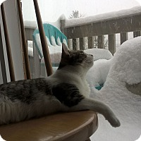Adopt A Pet :: Lil - Acushnet, MA