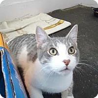 Adopt A Pet :: Abbott - Cleveland, OH