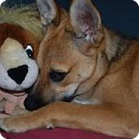 Adopt A Pet :: Heather - Homewood, AL