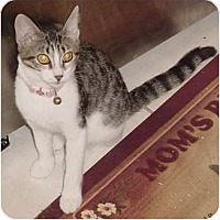 Adopt A Pet :: Mollie - Franklin, NC