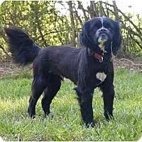 Adopt A Pet :: Tyson - Mocksville, NC