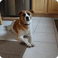 Adopt A Pet :: Mayvis - Marlton, NJ