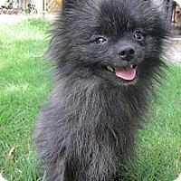 Adopt A Pet :: *Denver - Westport, CT