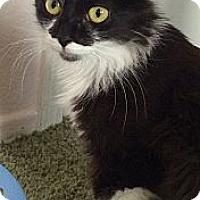 Adopt A Pet :: Kisses - Winchester, CA
