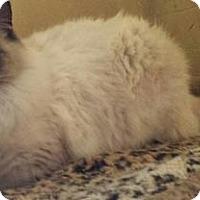 Adopt A Pet :: Arundel (Del) - Ennis, TX