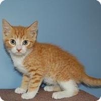 Adopt A Pet :: Ready! - McDonough, GA
