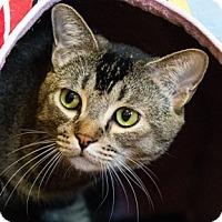 Adopt A Pet :: Lark - Calgary, AB