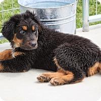 Adopt A Pet :: *Reef - PENDING - Westport, CT