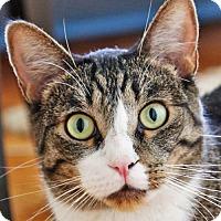 Adopt A Pet :: Jackson - Oakland, CA