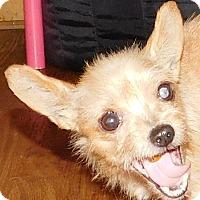 Adopt A Pet :: Hollis - MINNEAPOLIS, KS