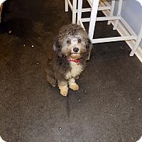 Adopt A Pet :: leonard - Jupiter, FL