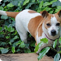 Adopt A Pet :: Lily - Atlanta, GA