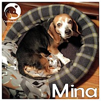 Adopt A Pet :: Mina - Pittsburgh, PA