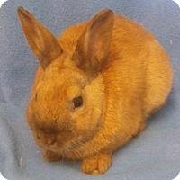 Adopt A Pet :: Freddie - Woburn, MA