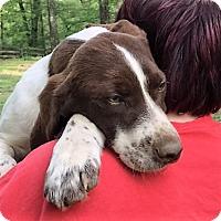 Adopt A Pet :: PAISLEY - sweetest girl; - Pewaukee, WI