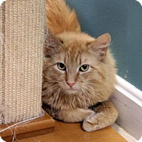 Adopt A Pet :: Judson - Paris, ME