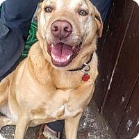 Adopt A Pet :: Marley #3 - Towson, MD