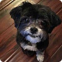 Adopt A Pet :: Fizzy! - New York, NY