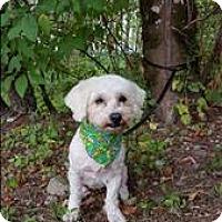 Adopt A Pet :: Keisha - Maple Ridge, BC