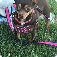 Adopt A Pet :: Cookie Dough (bonded pair) - Las Vegas, NV