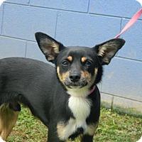 Adopt A Pet :: Jumbo - Randleman, NC