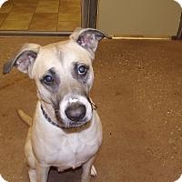 Adopt A Pet :: Marley *Petsmart GB* - Appleton, WI