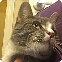 Adopt A Pet :: Reveille - LaJolla, CA