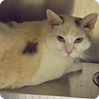 Adopt A Pet :: Winnie - Martinsburg, WV