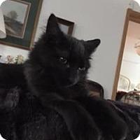 Adopt A Pet :: Ness - New York, NY