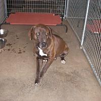 Adopt A Pet :: Ramps - Buchanan Dam, TX