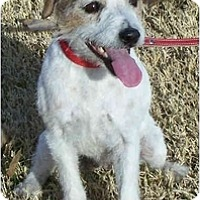 Adopt A Pet :: TUESDAY - Phoenix, AZ
