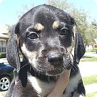 Adopt A Pet :: Ruby B#2M - Orlando, FL