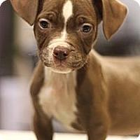 Adopt A Pet :: Homer - Sacramento, CA