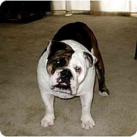 Adopt A Pet :: Monster*adoption pending* - Gilbert, AZ