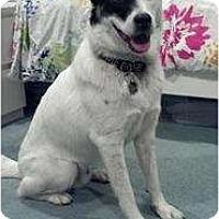Adopt A Pet :: Jack - in NE - kennebunkport, ME